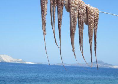 Tintenfische auf Nisyros
